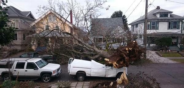 Tree_down_near_Hawthorne_in_SE_Feb2017